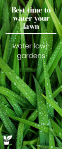 Best time to water your lawn - watering lawn tips -this article will teach you how to have a perfect lawn and healthy lawn.when to fertilize a lawn.lawn maintenance and lawn care. #lawnwater#lawn#lawntips#watering#lawntime#gardening#grass