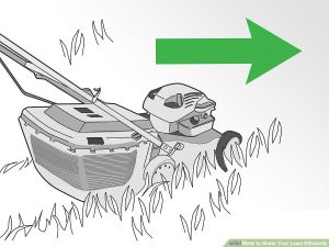 Water Your Lawn Efficiently