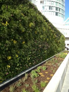 Green wall irrigation - irrigation supplies store