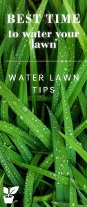 Best time to water your lawn - watering lawn tips -this article will teach you how to have a perfect lawn and healthy lawn.when to fertilize a lawn.lawn maintenance and lawn care.