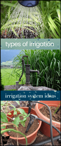 Types of irrigation - Water is a fragile resource and we got to incorporate ways to conserve it and not over-use it. maintain your garden! choose the right irrigation for your garden. irrigation system ideas raised beds|irrigation system ideas landscaping|irrigation system lawn|above ground sprinkler system PVC pipes|garden design layout backyard|drip irrigation for containers planters|green wall outdoor design. #irrigation#garden#drip#sprinkler#greenwall#backyard#lawn.