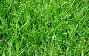 How to Choose the Best Type of Grass for Your Lawn