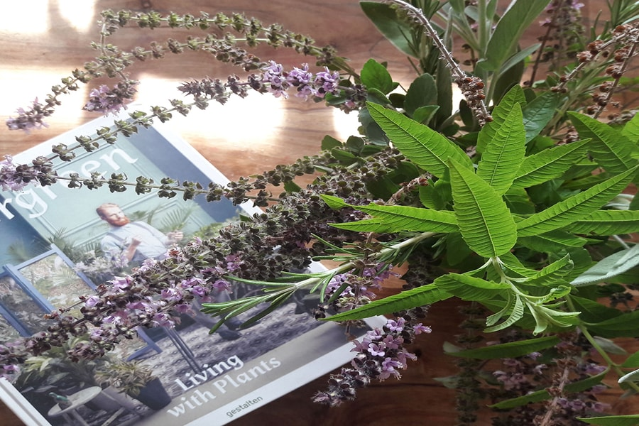 herb guide - need help with your herb garden planning, herb ideas and herb garden tips-in this article you'll learn about herb benefit,herb uses,how to harvest herbs,what herbs to plan together,when to plant herbs. you'll learn how to grow herb jars,container herbs,pot herb,indoor herb,outdoor herb. you'll learn how to make a kids herb garden they love,and garden herb ideas for herb decor home, with decorative herb garden. you'll have a beautiful herb garden(herbs and spice).