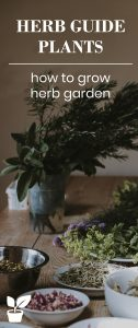 herb guide plants-how to grow herb gardening, herb ideas and herb garden tips-in this article you'll learn about herb benefit,herb uses,how to harvest herbs,what herbs to plan together,when to plant herbs. you'll learn how to grow herb jars,container herbs,pot herb,indoor herb,outdoor herb. you'll learn how to make a kids herb garden they love,and garden herb ideas for herb decor home, with decorative herb garden. you'll have a beautiful herb garden(herbs and spice).