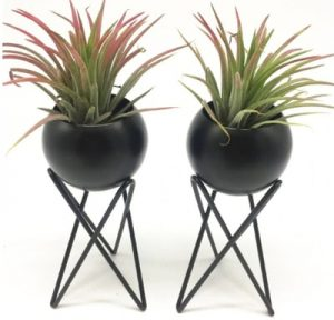 indoor air plants decor