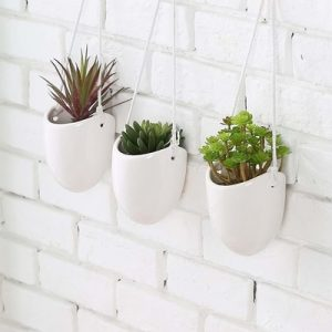 air plant holder hanging
