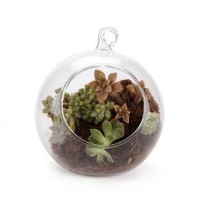 air plants glass planters
