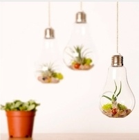 Air Plant holder ideas - unique plants indoor decor