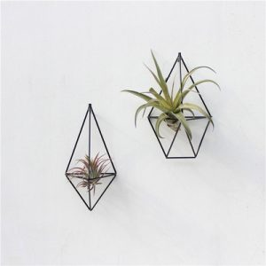 air plant holder wall decor