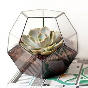 air plants geometric planters