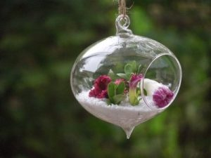 air plant holder hanging|air plants glass planters