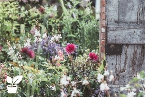 Ecological garden tips for your soil,plants and runoff water