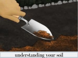 understanding your soil