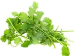 partial shade herbs coriander