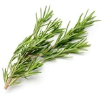 when to plant herbs - rosemary
