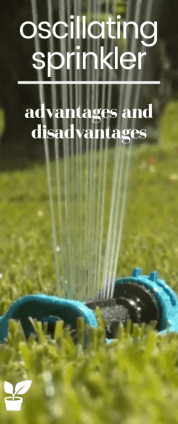 If you are currently trying to figure out which way to water your garden. In this article, I present the oscillating sprinkler water disadvantages and advantages of the irrigation system and the product itself. You can also read reviews written by other consumers. lawn watering ideas yards|lawn watering backyards|lawn watering system sprinkler|lawn water grass|lawn irrigation sprinkler|lawn irrigation home|irrigation sprinkler lawn. #oscillating#sprinkler#lawn#grass#irrigation#gardening.