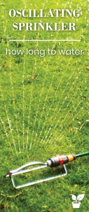 how long to water the lawn with an oscillating sprinkler? -this article will teach you a few ways you can know if you are watering your lawn long enough with an oscillating sprinkler.how to Perfect You're oscillating sprinkler Timing, and the oscillating sprinkler water advantages and disadvantages. lawn watering tips|lawn watering schedule|lawn watering system sprinkler|lawn watering ideas plants|lawn water grass|water your own grass lawn|grass watering. grass#lawn#watering#oscillating#sprinkler#yard.