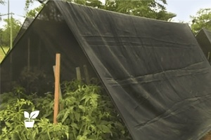 how much does shade cloth reduce temperature? experiment and research