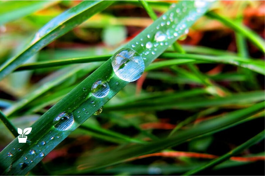 A Guide to Water-Efficient Irrigation – Smart Landscaping garden