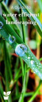 A Guide to Water-Efficient Irrigation - Smart Landscaping