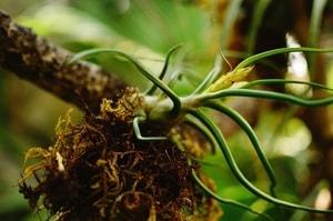 South America Air Plants Rain forest