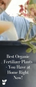 Best Organic Fertilizer Plants - You Have at Home Right Now