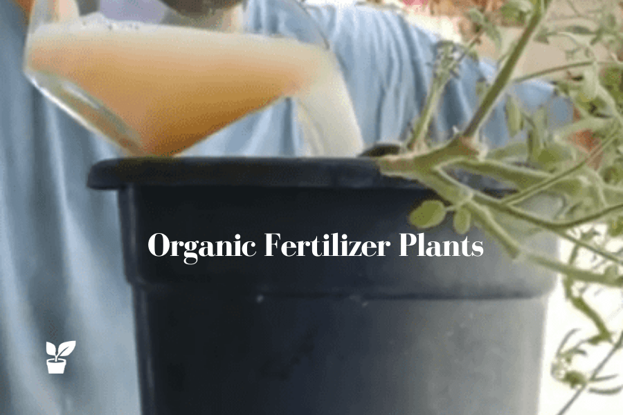Best Organic Fertilizer Plants - You Have at Home Right Now.