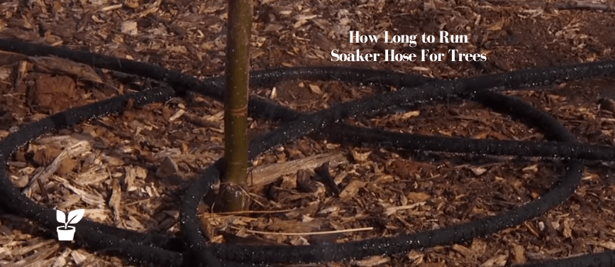 How Long to Run Soaker Hose For Trees