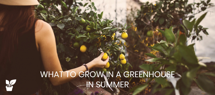 What to Grow in a Greenhouse in Summer | Greenhouse Planting Guide