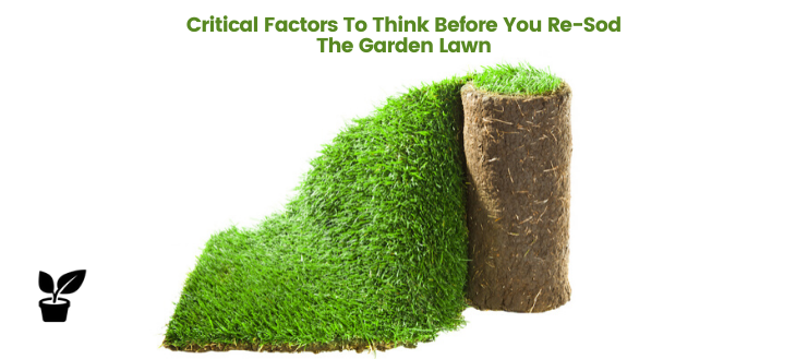 Critical Factors To Think Before You Re-Sod The Garden Lawn