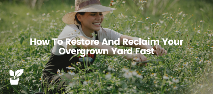 How To Restore And Reclaim Your Overgrown Yard Fast